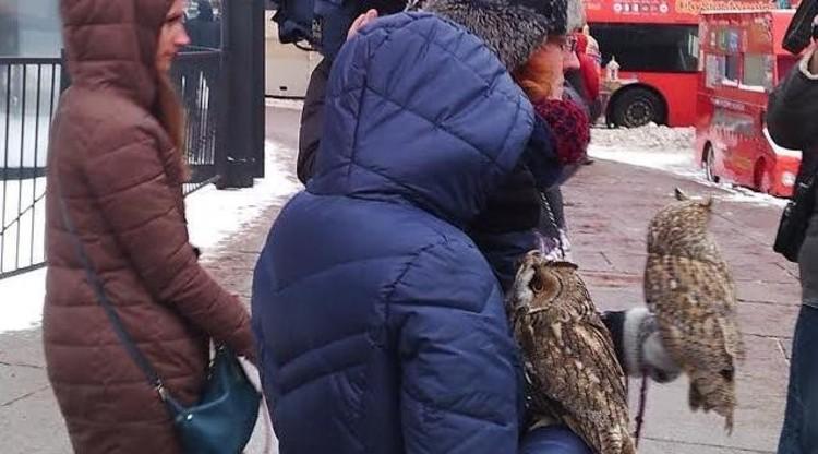 В центре Петербурга полиция изъяла совят, измученных съёмками с туристами