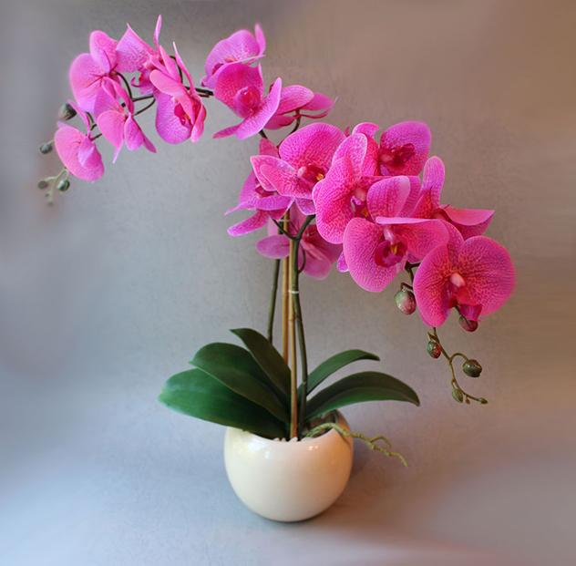 Как вырастить орхидею из листика.