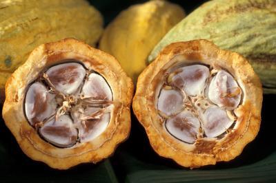Чудесные свойства масла какао