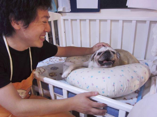 В Японии уже есть дома престарелых для домашних животных