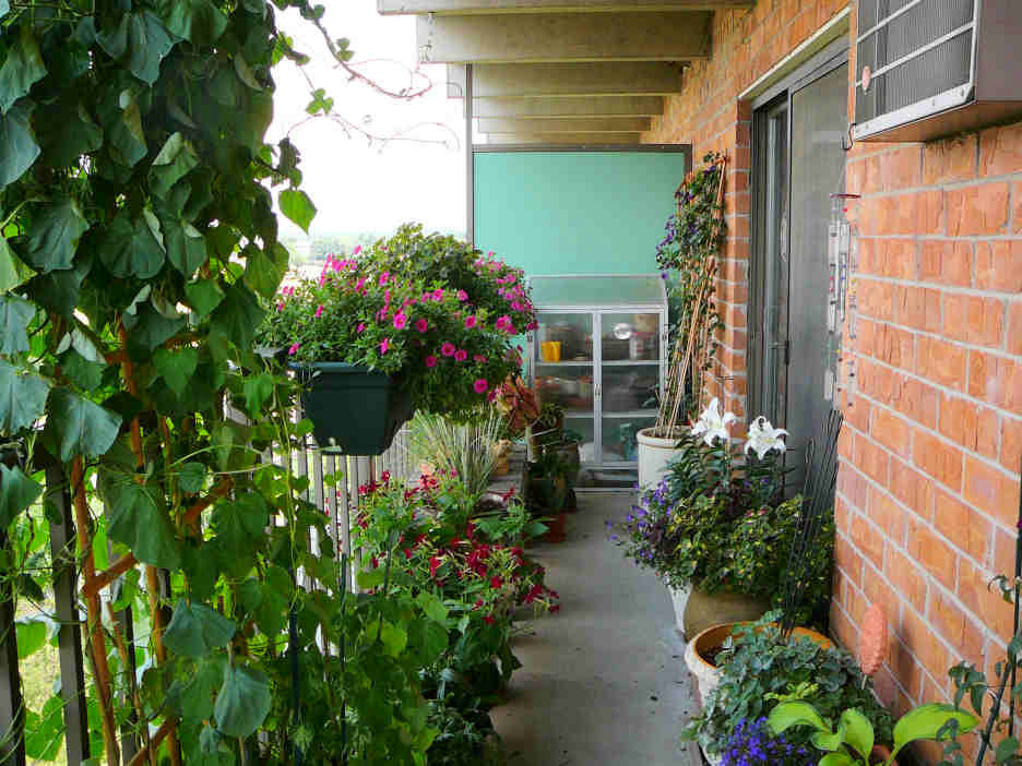 Розовые лепестки цветов на балконе