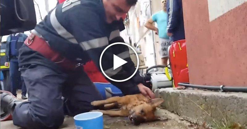 Пожарный, ожививший собаку, стал героем интернета