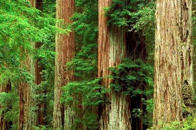 русские лес