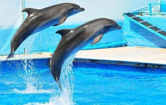 Минкульт хочет запретить насмешки над дельфинами и общение с ними в пьяном виде