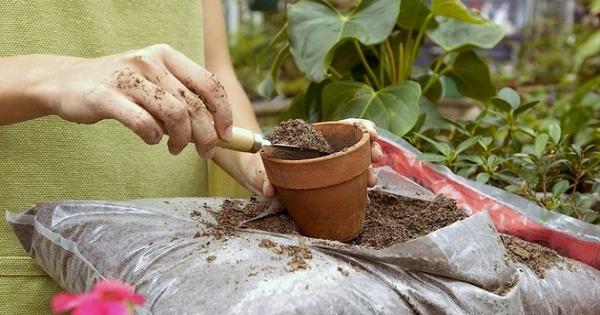 Правильное меню для «зеленых друзей»: чем подкармливать домашние растения.