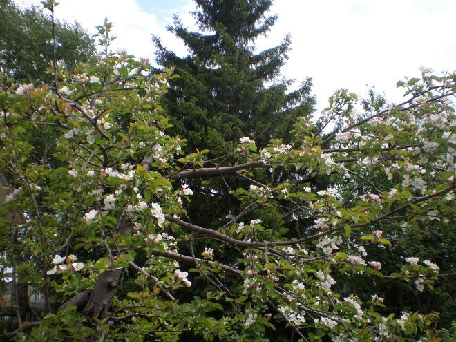 Личный опыт: Каково это — быть садоводом в Сибири
