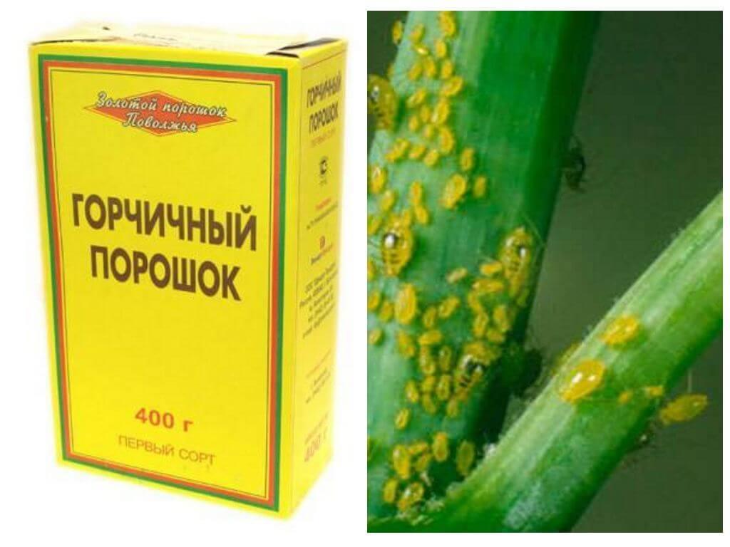Image result for Горчичный порошок в огороде