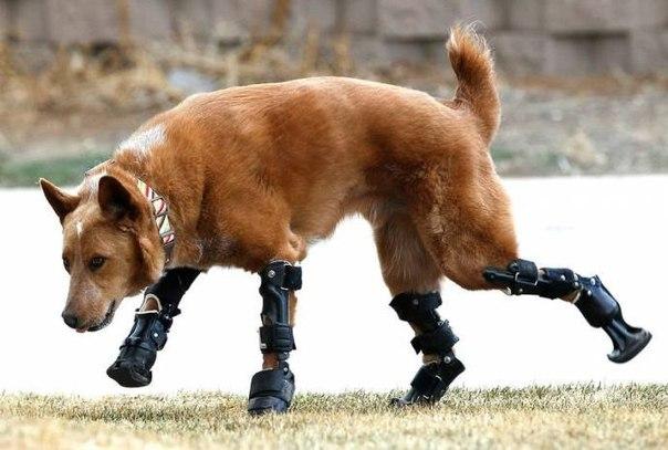 Выживший щенок, чьей удаче и…
