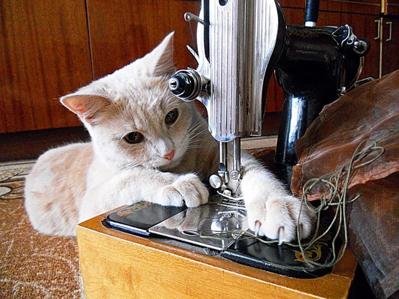 1. «Ну, хозяйка, шторы можно вешать»  коты, прикол, юмор