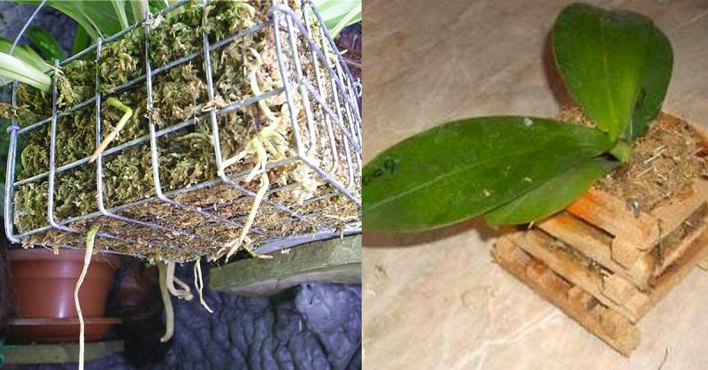 пересадка орхидей в корзину