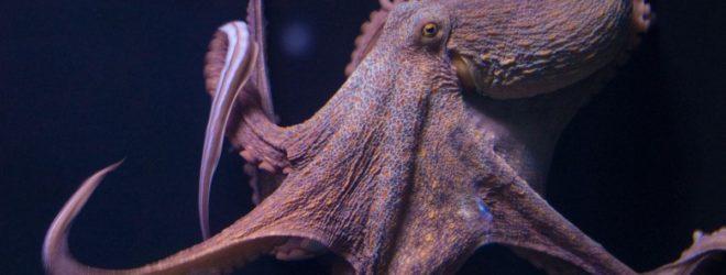 10 фактов об осьминогах, которые заставят вас нервничать