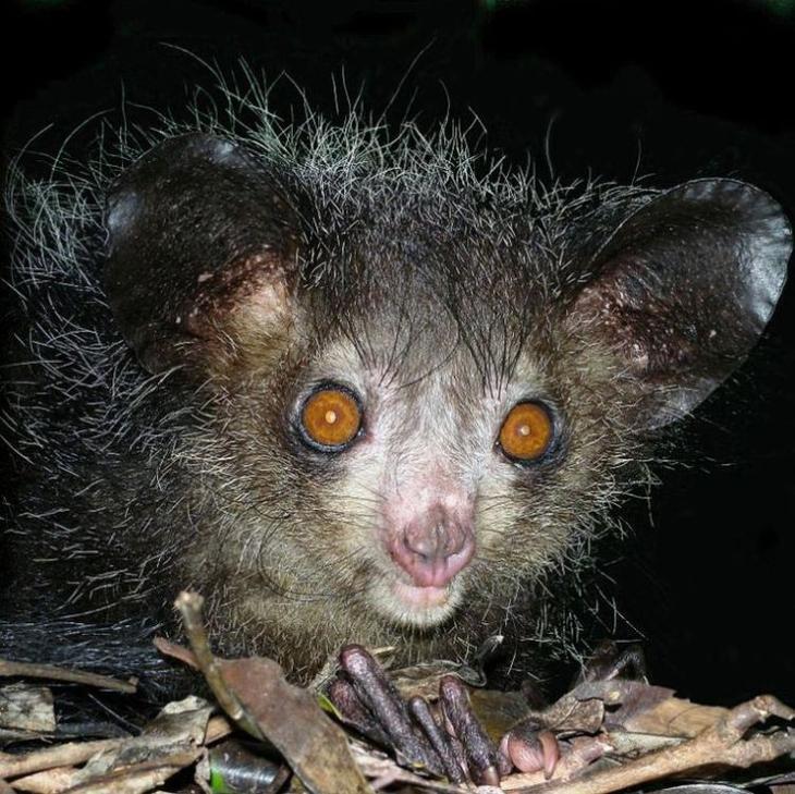 На лицо ужасные, добрые внутри… 10 животных, которых вовсе не стоит бояться!