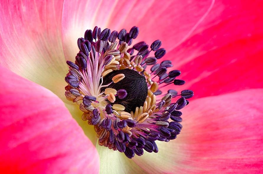Картинки красивых цветов фото