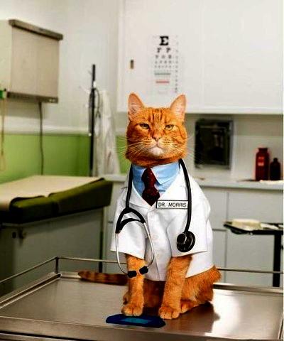 рыж.кот- врач