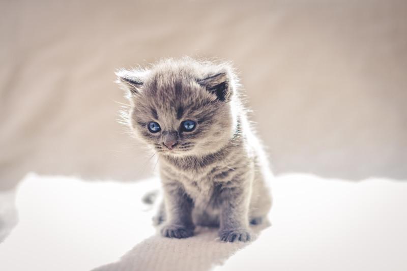 Вот таких милых котят фотографировал