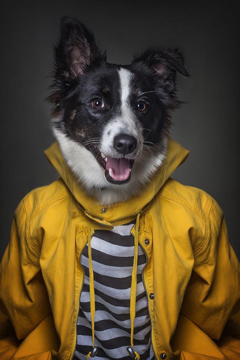 Если бы собаки были людьми