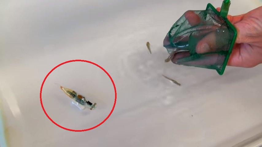 В Швейцарии создали робота, который будет шпионить… за рыбами