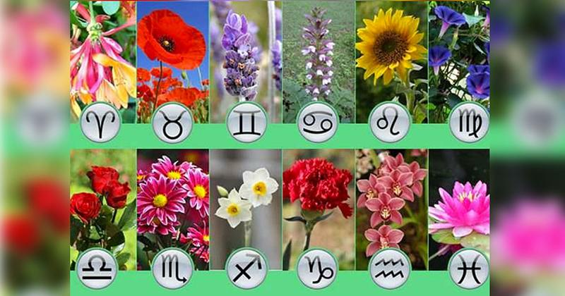 Лучшие цветы для вашего сада, согласно астрологическому гороскопу