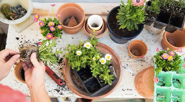 5 причин, из-за которых растения гибнут при пересадке