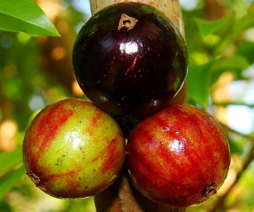 Необычные плодовые деревья. Фото