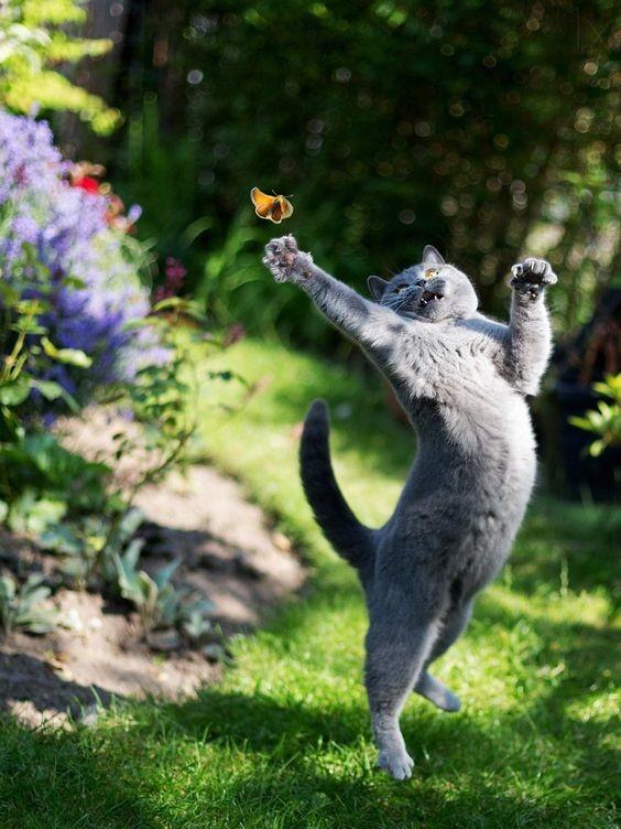 А погулять на природе? Красота же! коты, милота, поведение, счастье, эмоции