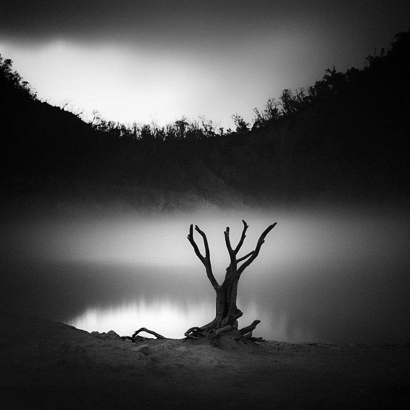Нуарные снимки от мастера чёрно-белой фотографии нуар, природа, фотография, хенгки коентжоро