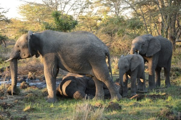 4-elephant-mother-and-her-grieving-children
