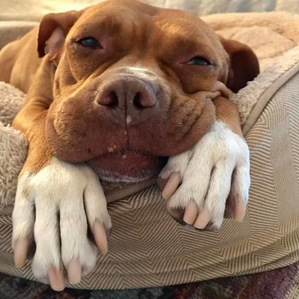 Собака, прожившая 8 лет на цепи, обрела любящего хозяина