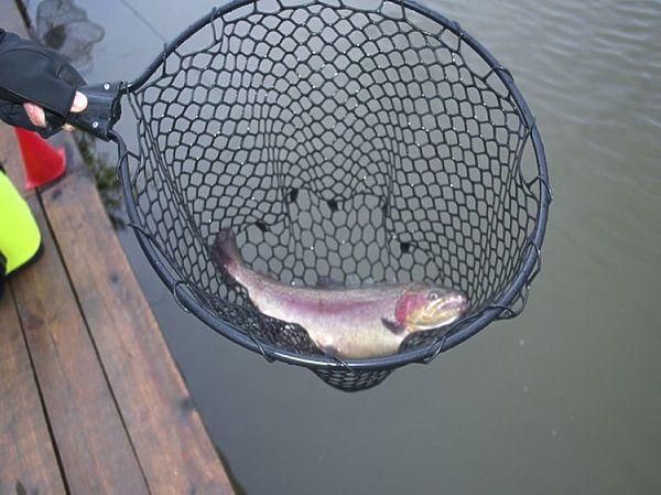 рыбалка импортные прикормки