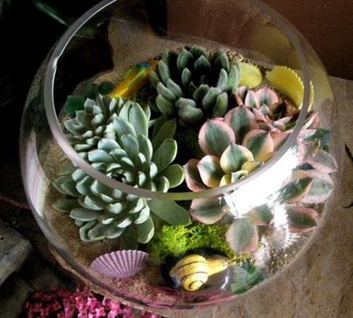 Композиции из суккулентов — уголок живой природы в вашем доме