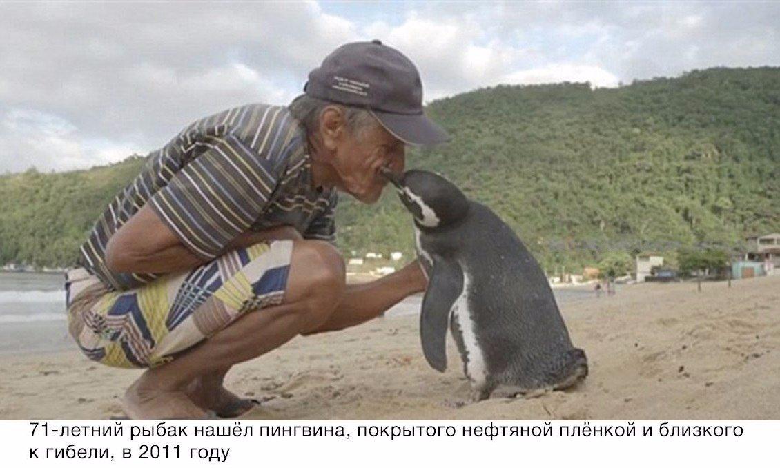 Пингвин проплывает 8000 км каждый год, чтобы увидеть человека, который спас ему жизнь...