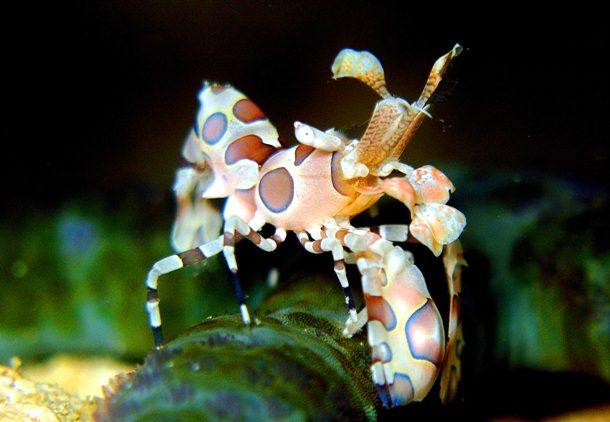 Морские существа