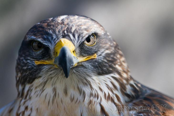 как соображают птицы