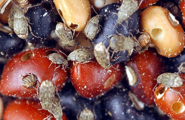 В Хабаровске на зарубежном судне нашли опасных жуков