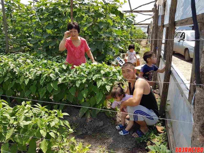Секрет от фермера со Ставрополья Леонида Кима: зарабатываем миллион за сезон