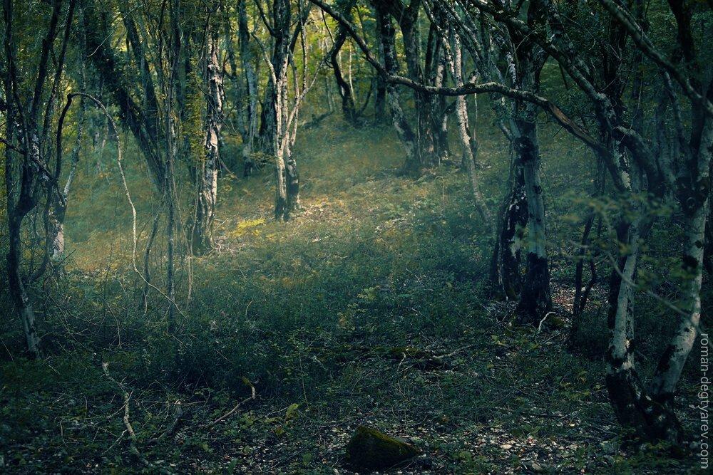 Какие тайны хранит английский лес?
