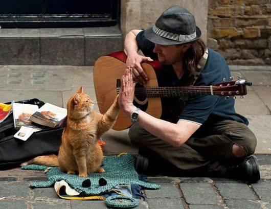 Кот изменил его жизнь в лучш…