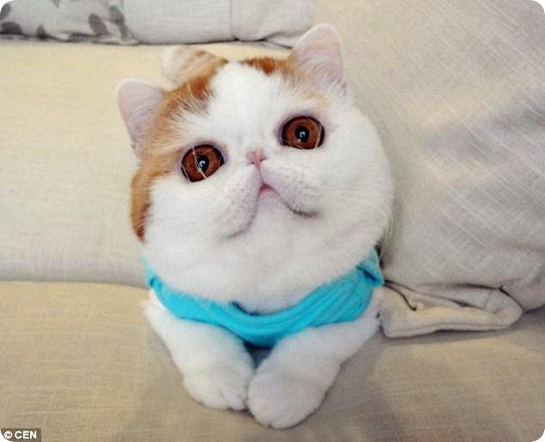 Милый и забавный кот Снупи