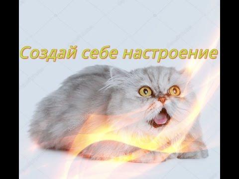Позитив Смешное видео о животных Кошки собаки Для детей Fanny animals Создай себе настроение