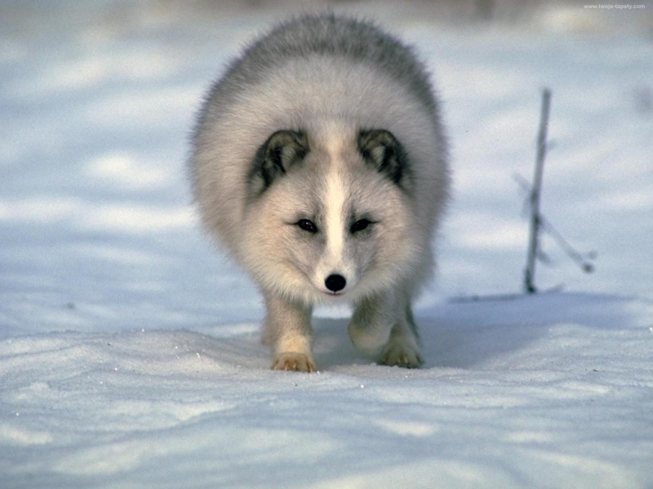 Картинки по запросу большой арктический заповедник фото