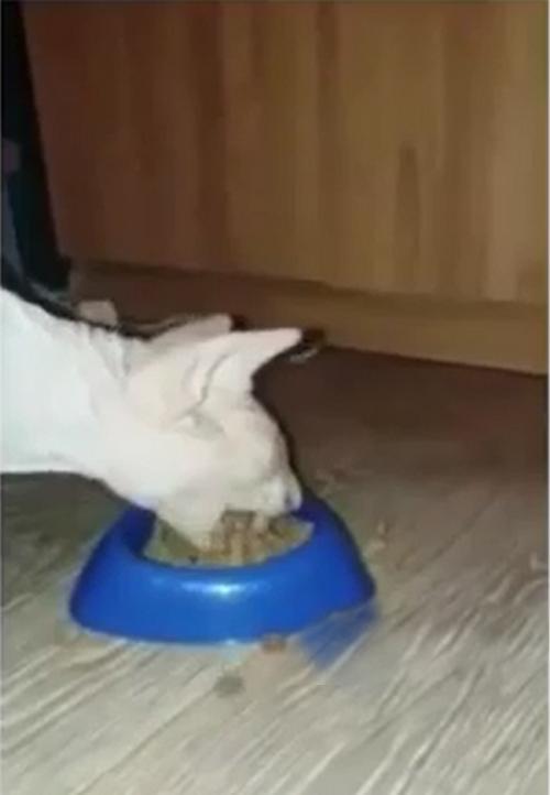 Кот Экскаватор