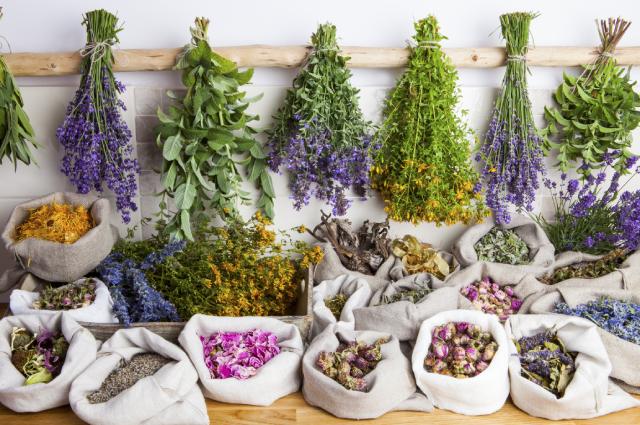 Какие лекарственные растения засушить на зиму