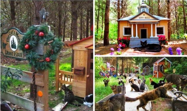 «Ранчо для кошек», США доброта, животные, мир