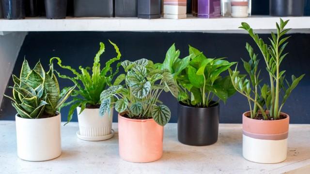 Покупка комнатных растений: от очевидностей до неожиданных вопросов