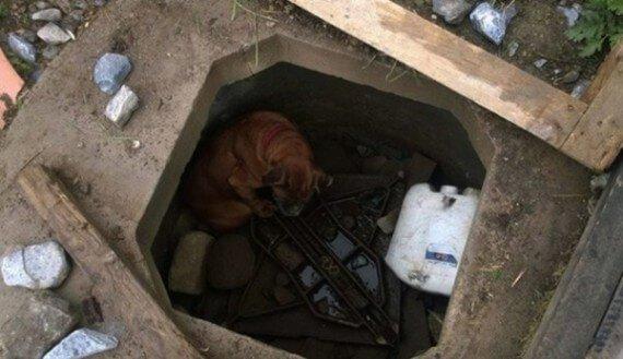 Когда она перестала приносить здоровых щенков, ее выбросили в яму, накрыв досками