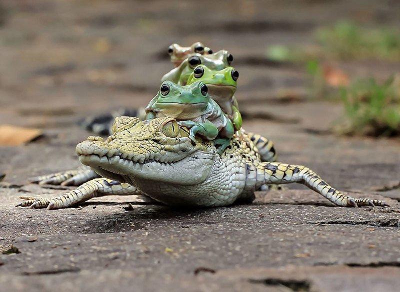 Царевна-лягушка: индонезиец снимает неожиданные грани обычных лягушек