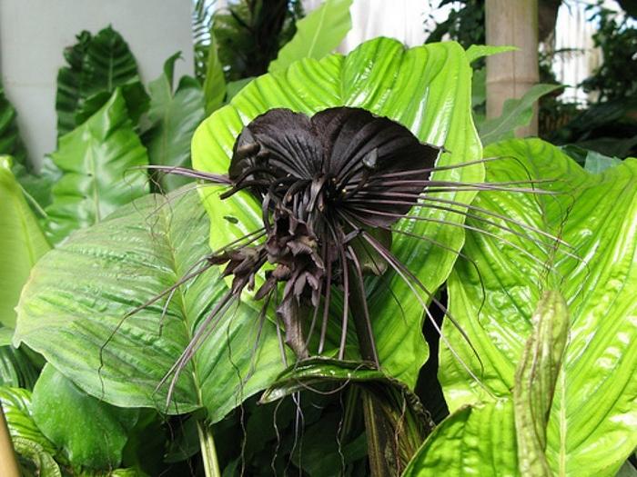 Самые ужасные растения нашей планеты