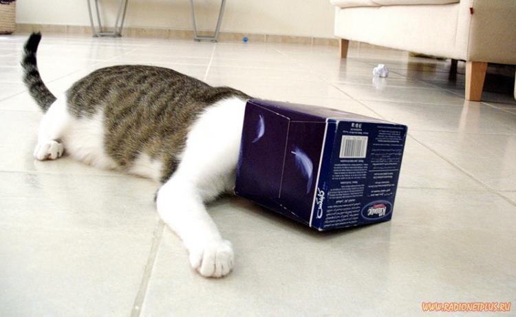 Коты в коробках, сумках, бан…