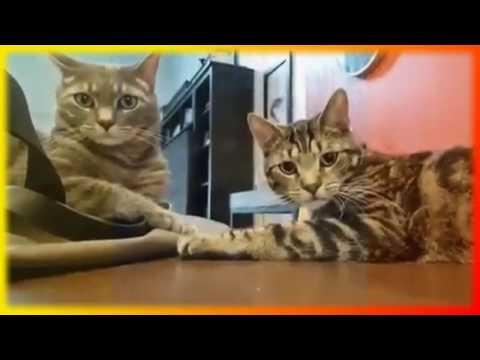 Приколы с животными Видео для детей и не только Создайте  себе хорошее настроение