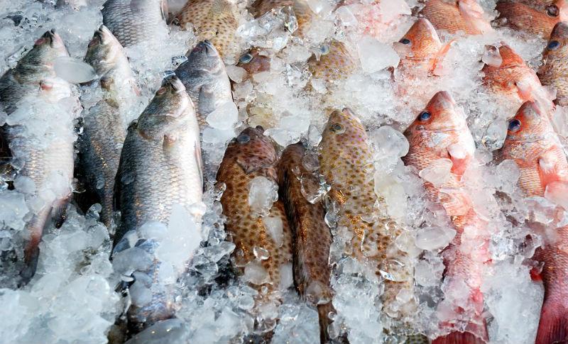 Японцам удается оживлять замороженную рыбу в теплой воде